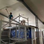 Miners Rest Veterinary Equine Practice commercial painting Ballarat